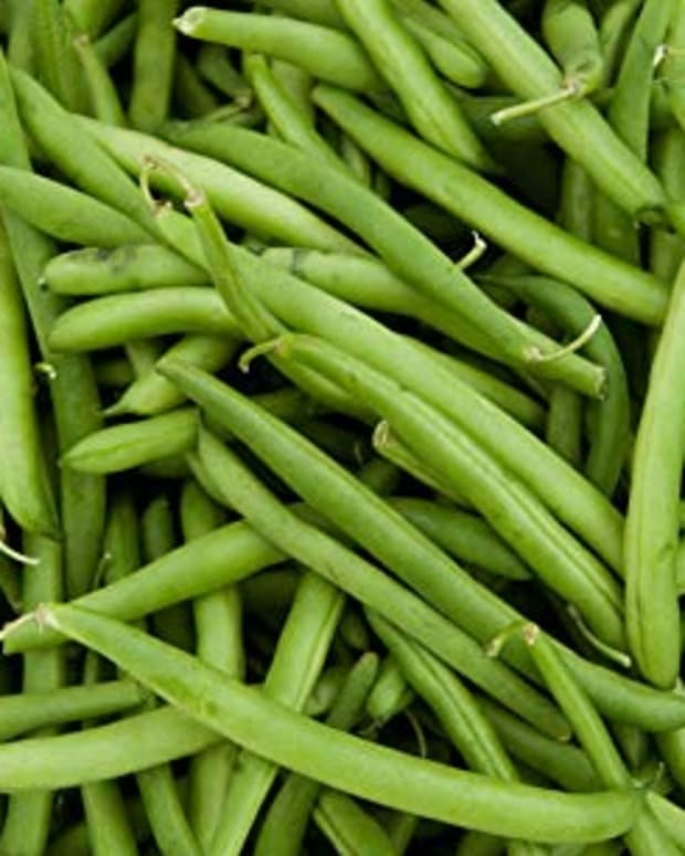 growing-green-beans-in-ohio