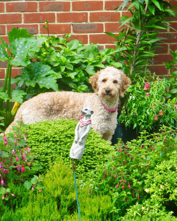 top-5-sturdy-garden-plants-for-dog-owners