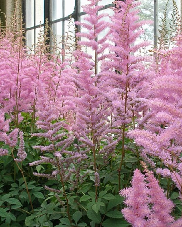 ten-ornamental-flowering-plants-that-grow-in-the-shade