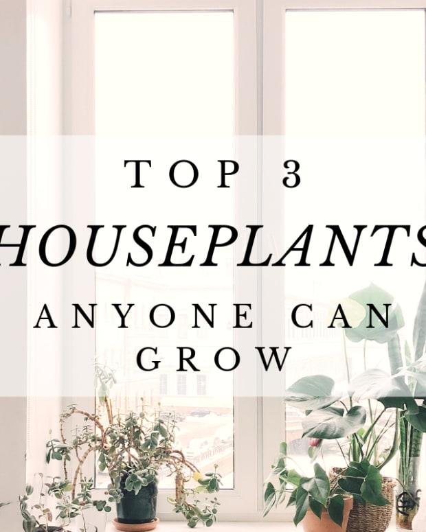 houseplants-anyone-can-grow