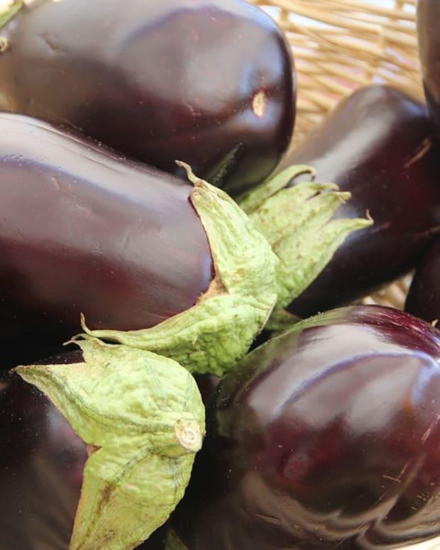 how-to-grow-any-kind-of-eggplant