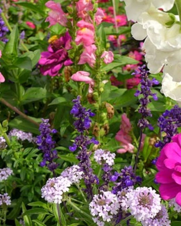 secrets-to-creating-a-picture-perfect-flower-bed