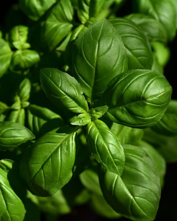 best-herbs-to-grow-indoors