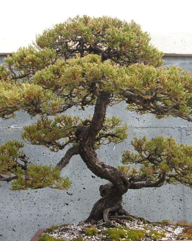 essential-tools-to-create-beautiful-bonsai