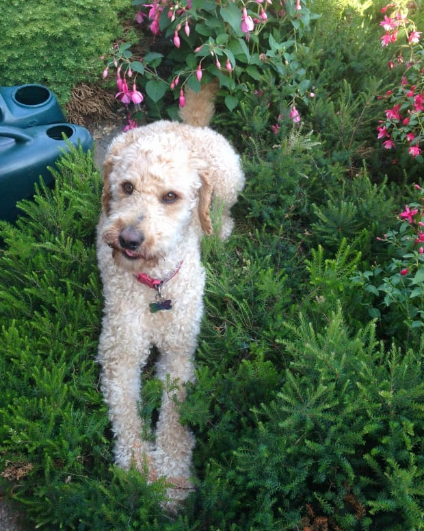 top-aromatic-plants-for-a-sweet-smelling-dog