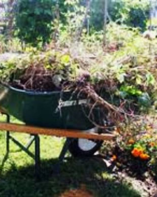 preparing-your-garden-for-fall