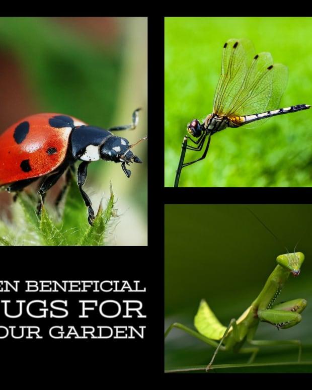 ten-beneficial-bugs-for-your-garden