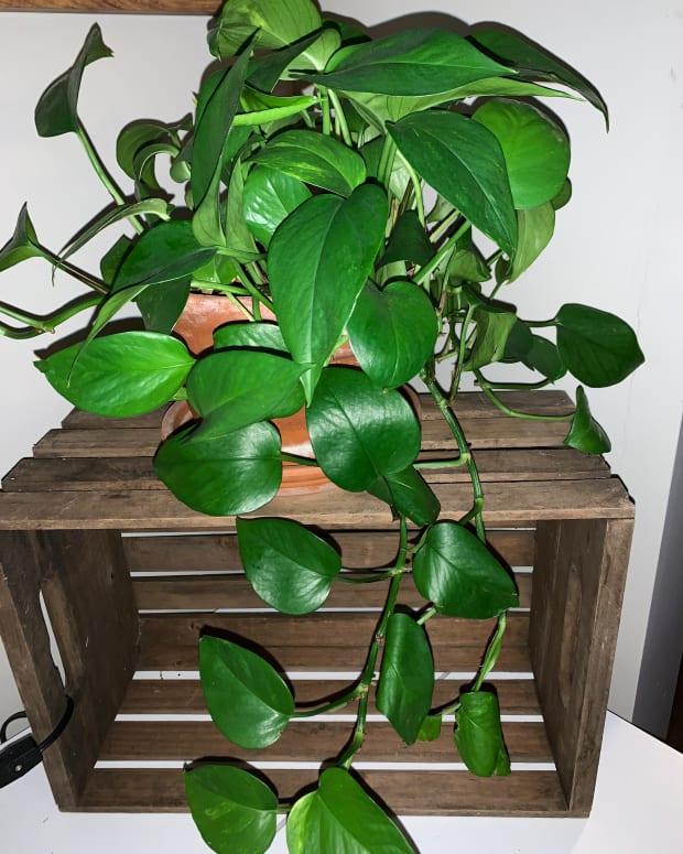 top-5-indoor-house-plants