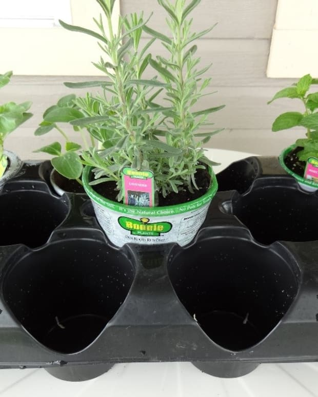 making-plant-containers-from-household-items