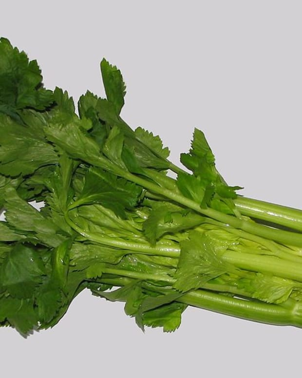 how-to-grow-celery-for-spring-or-fall