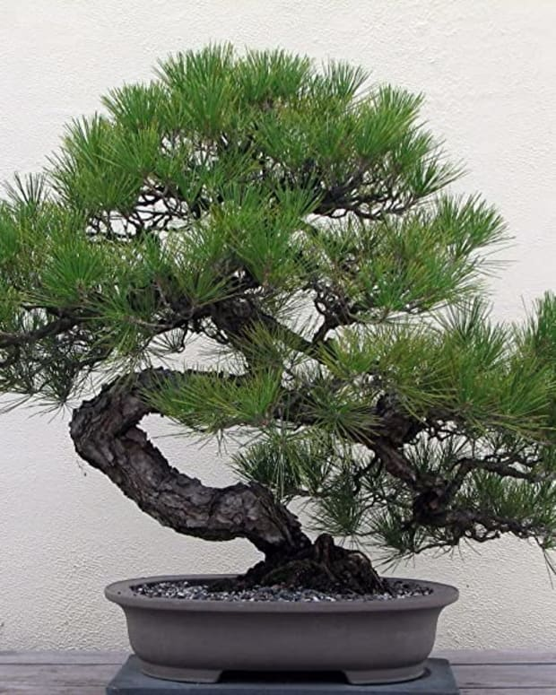 starting-your-first-bonsai