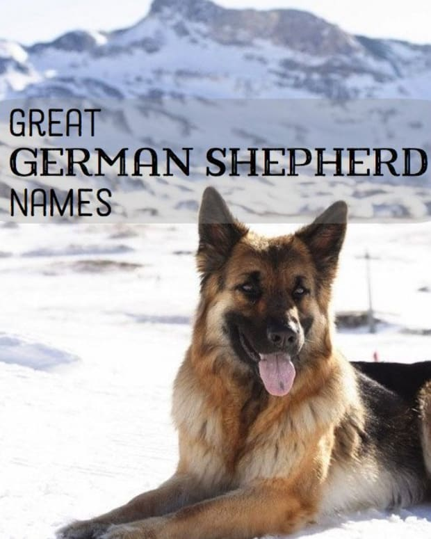 list-of-german-shepherd-names