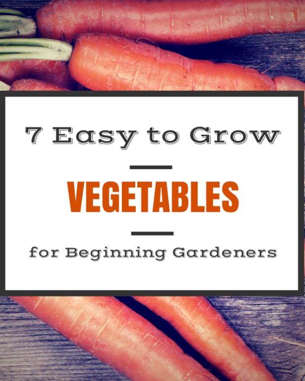 best-vegetables-for-the-wanna-be-gardener