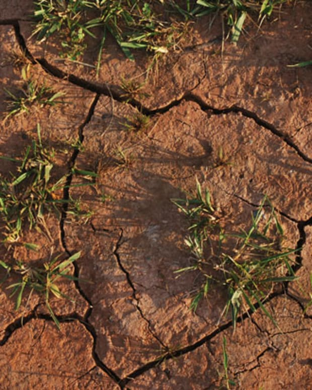 water-saving-tips-in-a-drought-year