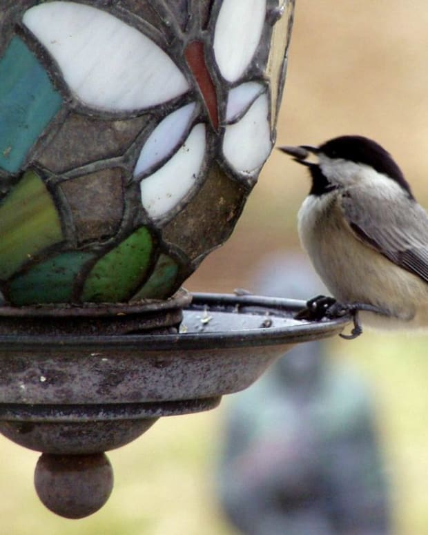bringing-birds-to-the-garden