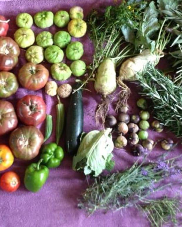 seven-cost-effective-garden-plants-that-save-you-money