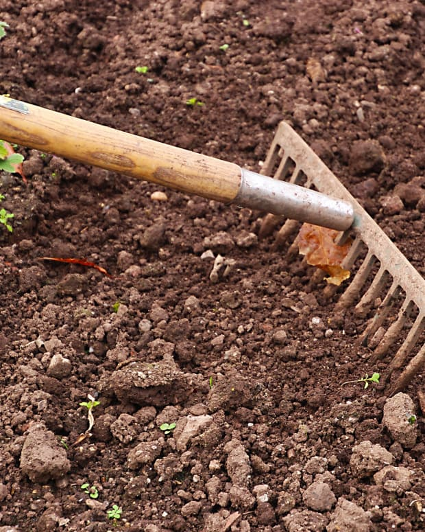 how-to-check-your-soil-without-purchasing-a-soil-testing-kit