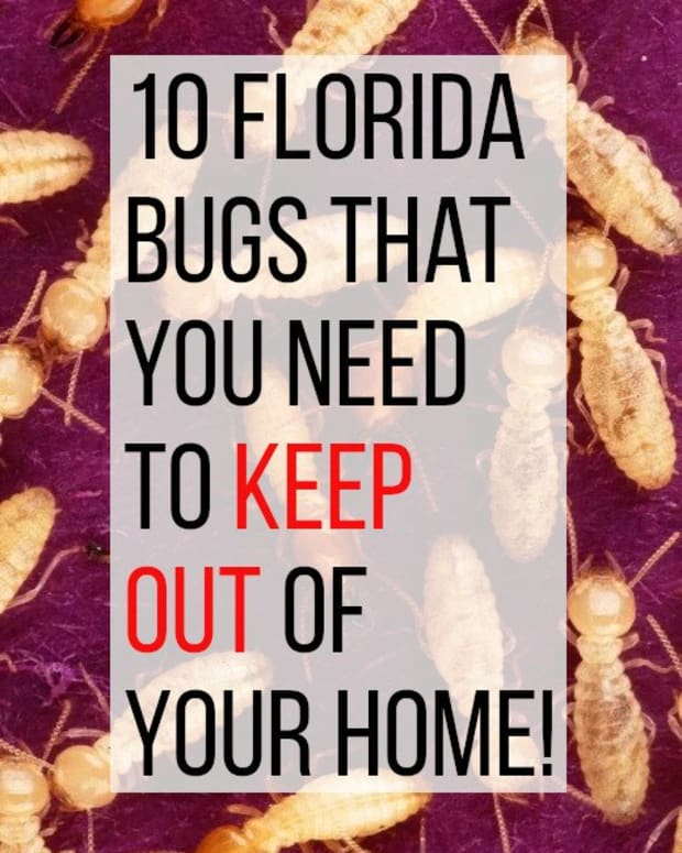 10-household-bugs-to-watch-out-for-in-florida