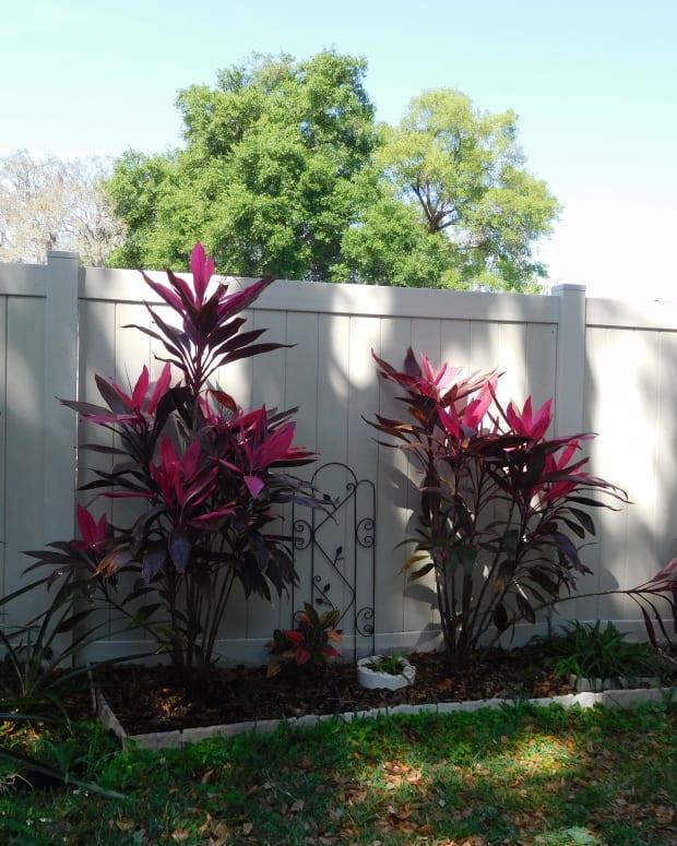 choosing-plants-for-your-landscape-follow-natures-lead