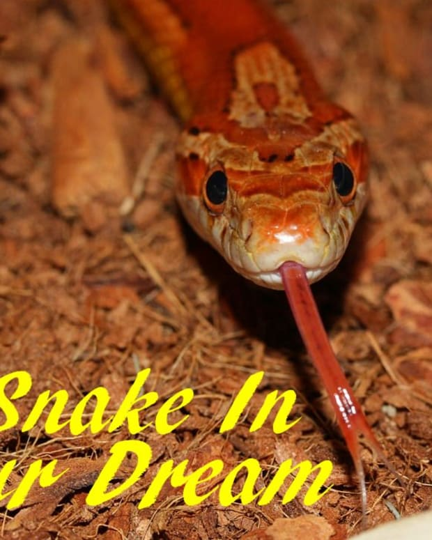 dream-interpretation-snakes-meaning