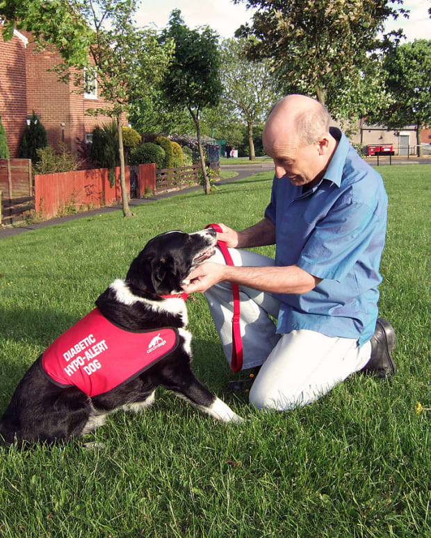 how-diabetes-alert-dogs-help-patients-manage-blood-sugar