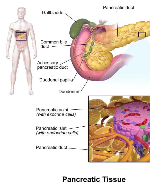 immunotherapy-a-potential-treatment-for-type-1-diabetes
