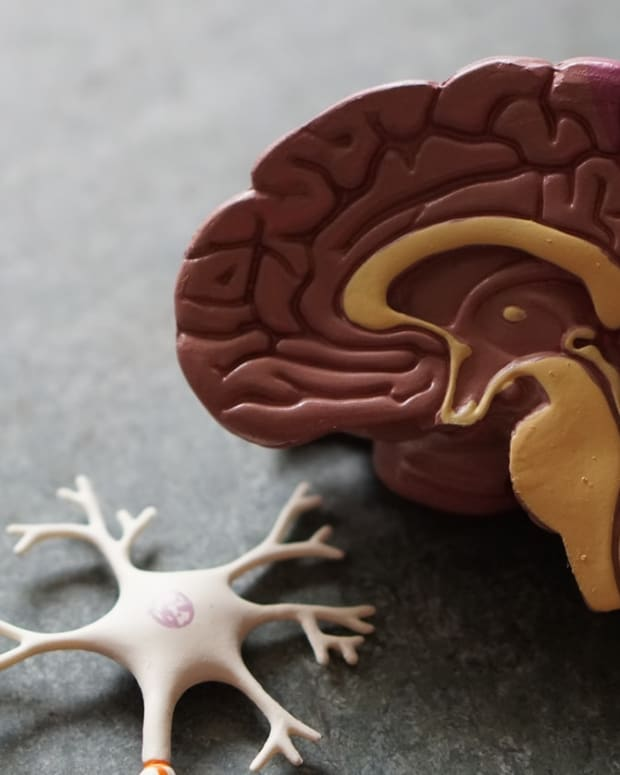 how-does-bipolar-disorder-impact-the-human-brain-what-are-the-possible-remedies-for-bipolar-disorder