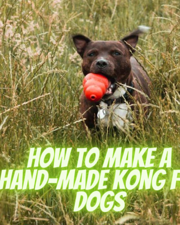 improvising-a-hand-made-kong-for-reactive-dogs
