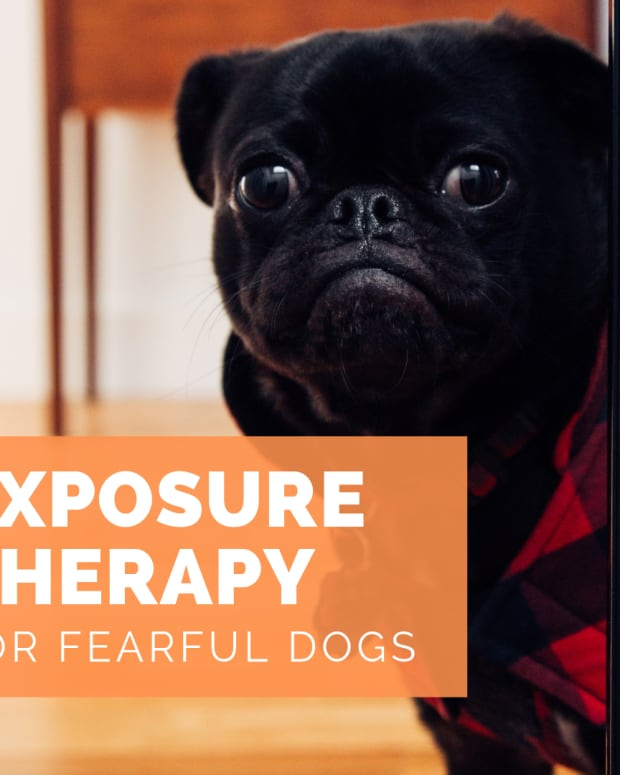 exposure-therapy-for-dogs
