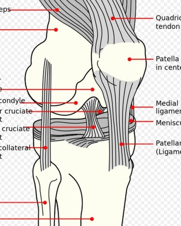 evaluating-the-damage-from-a-dogs-meniscus-tear