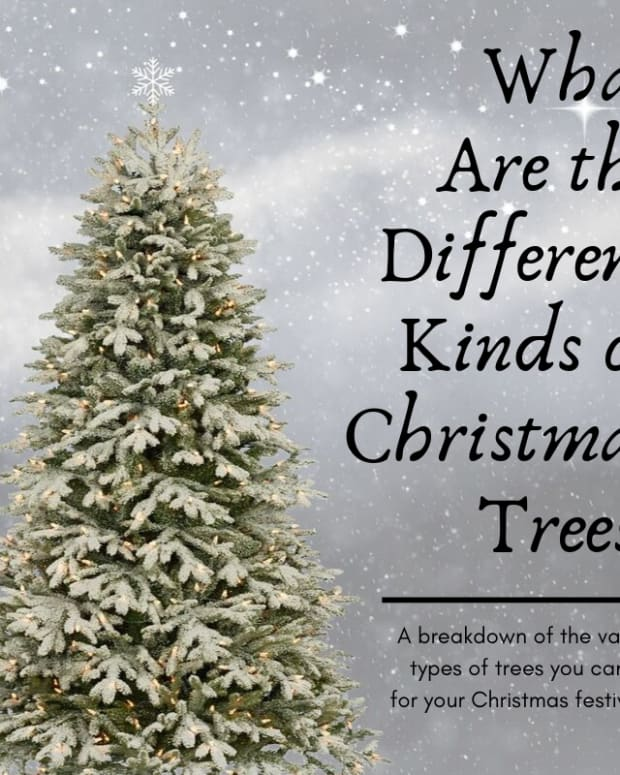 best-types-of-trees-for-christmas