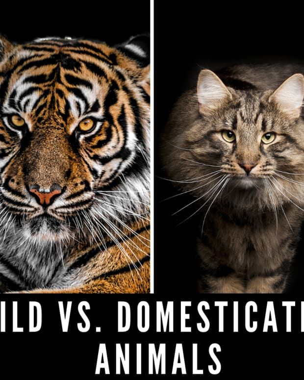 wild-domesticated-animals