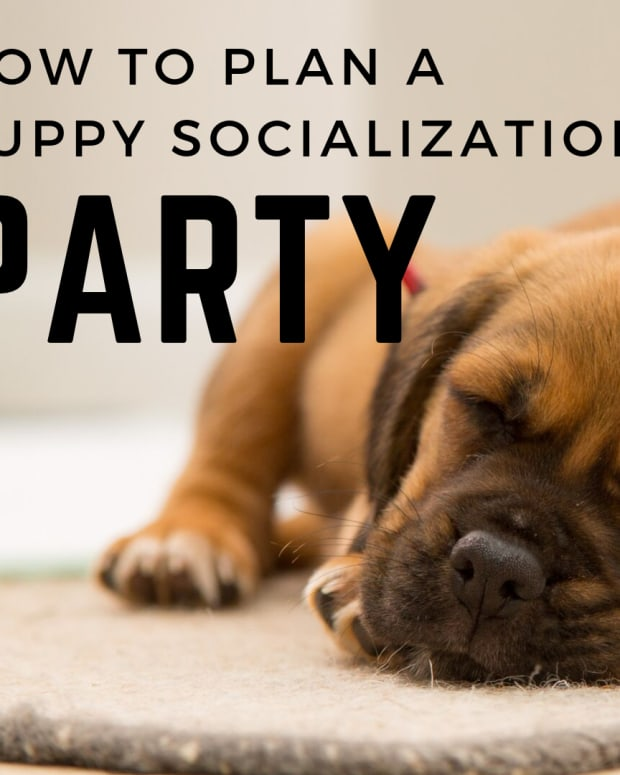 how-to-organize-a-puppy-socialization-party