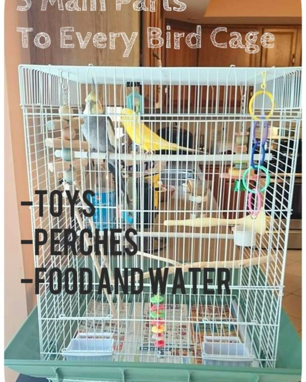how-to-set-up-a-bird-cage-for-a-parakeet-or-cockatiel
