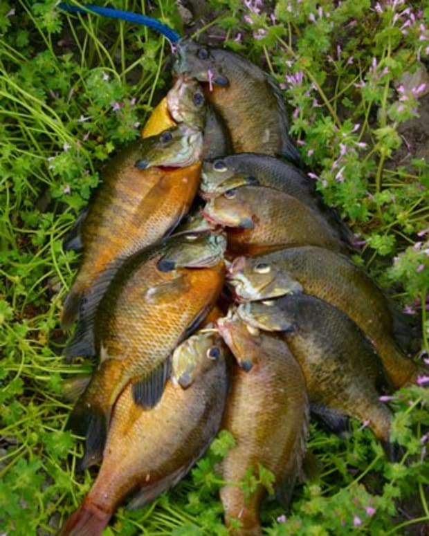 bream-fishing