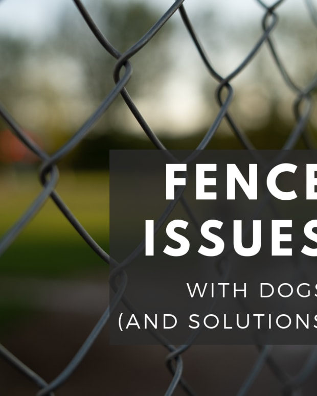 fence-ideas-for-dog-owners
