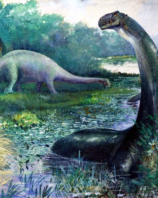mokele-mbembe-a-living-sauropod-dinosaur-in-the-congo