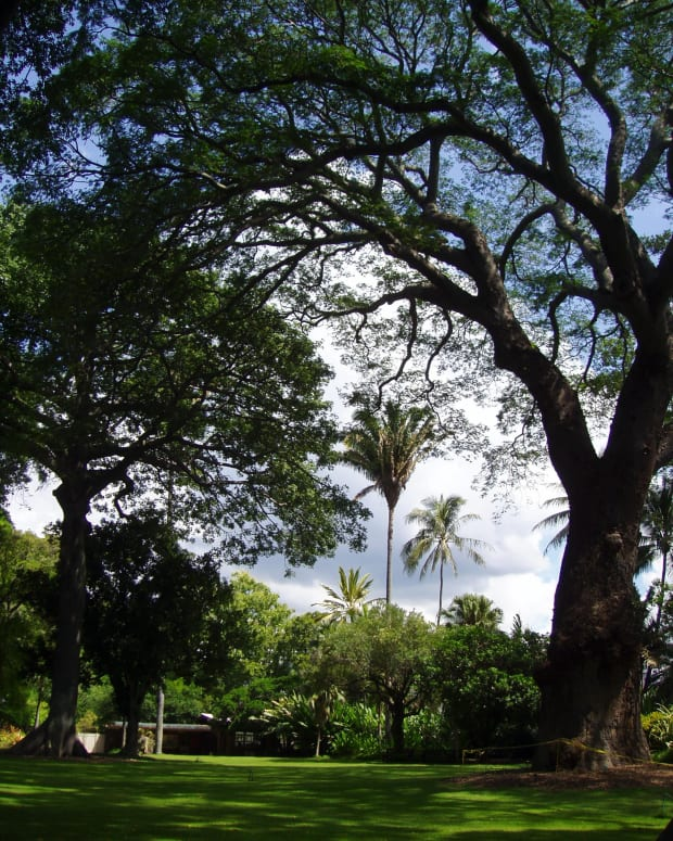 5-unique-botanical-gardens-of-oahu-for-tourists-and-locals