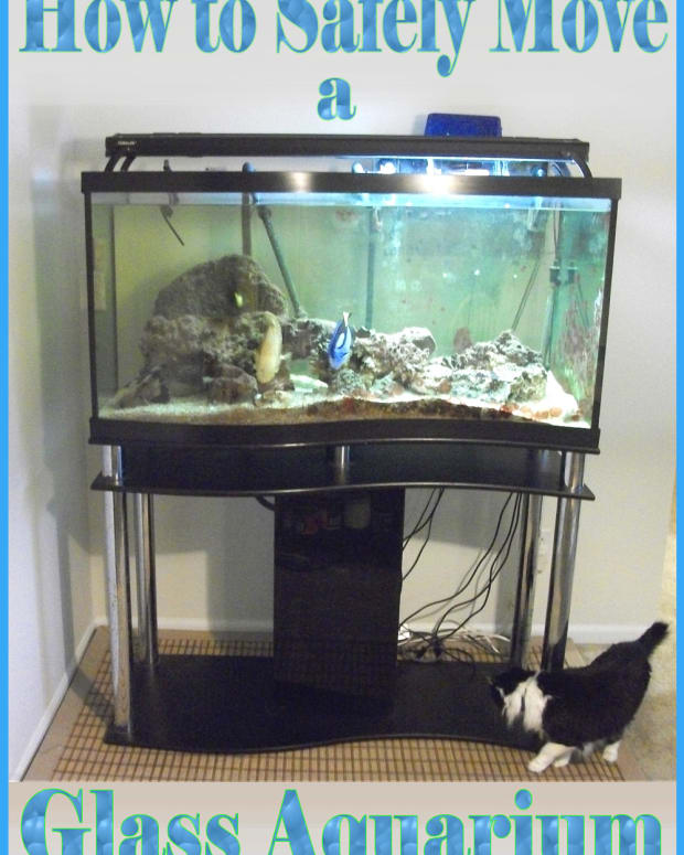 how-to-move-a-large-empty-glass-aquarium