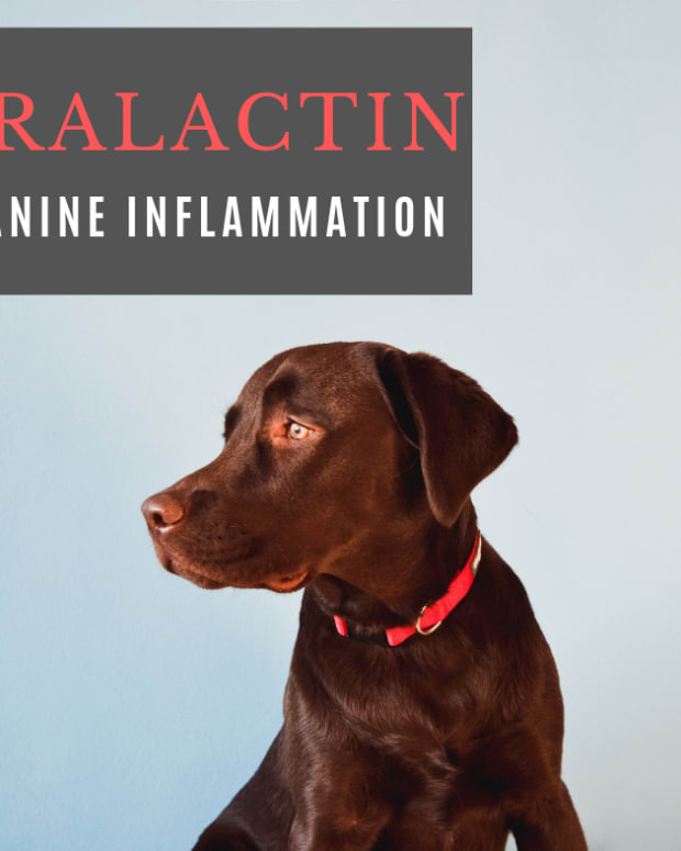 duralactin-for-dogs-side-effects-and-benefits