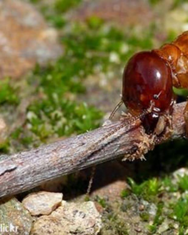 do-termites-bite-people