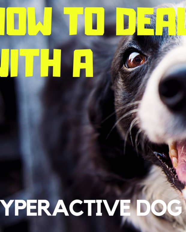 how-to-calm-down-your-hyper-dog