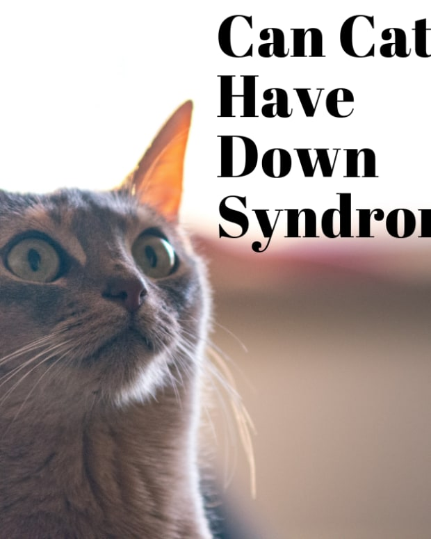 can-cats-have-down-syndrome-the-lowdown-on-feline-ds