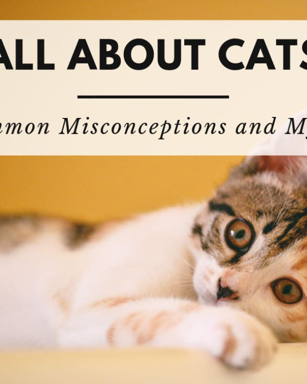 cats-five-common-misconceptions