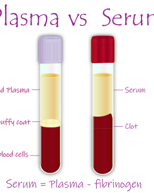 difference-between-plasma-and-serum