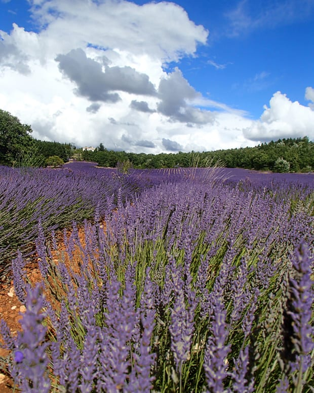 southern-france-lavender-festival-in-sault-provence