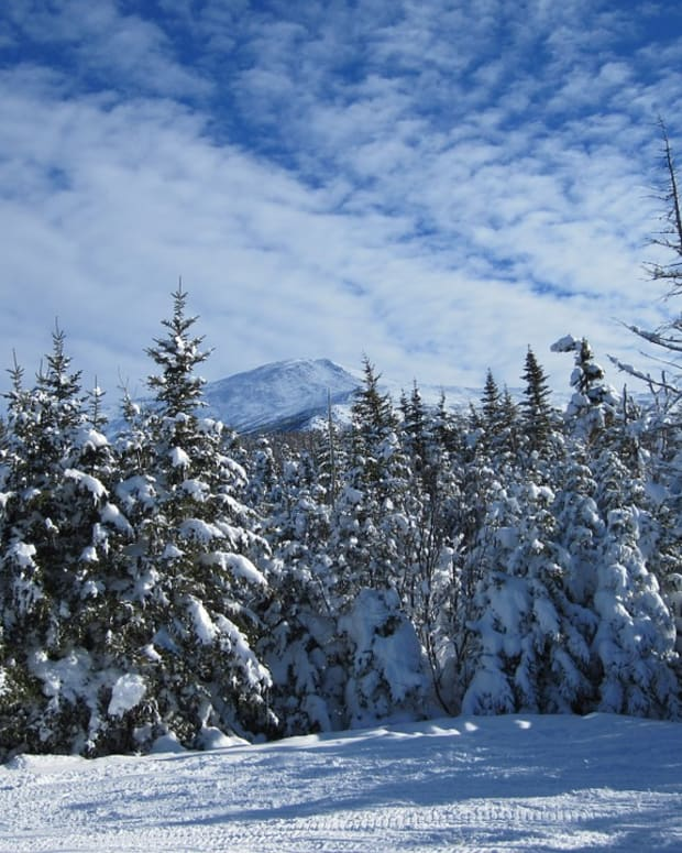 Fir Trees with Snow