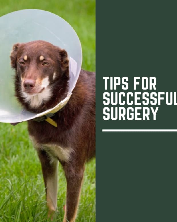 ten-tips-to-successful-dog-surgery