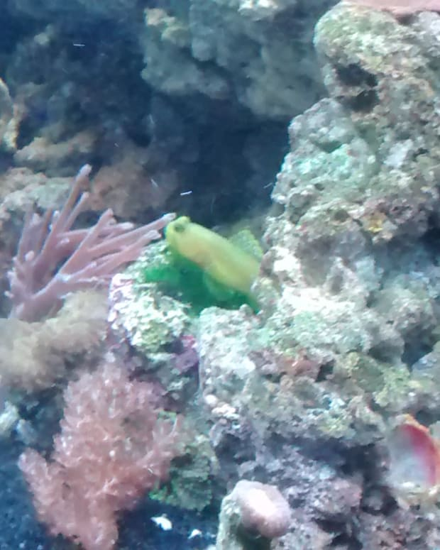 how-to-set-up-and-maintain-your-own-marine-reef-aquarium
