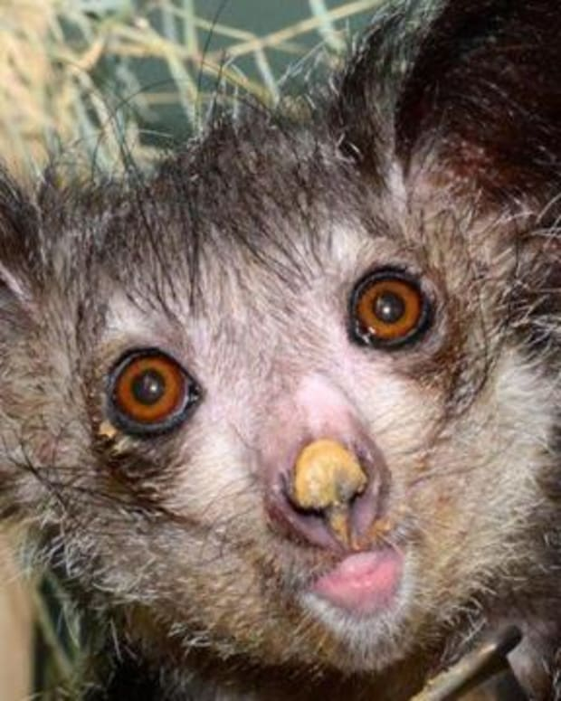 top-10-animals-that-look-scary-but-are-harmless